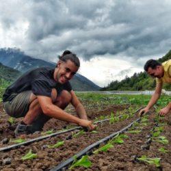 Viaggiare gratis lavorando (poche ore) in fattoria: si chiama 'wwoofing' ed ecco come si fa