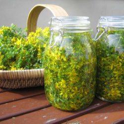 San Giovanni: la notte delle streghe e la raccolta delle erbe, significato e tradizioni
