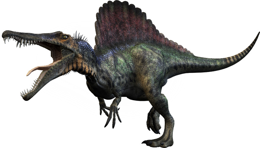 dinosauro-con-la-vela-lo-spinosauro-il-piu-grande-dinosauro-carnivoro-conosciuto