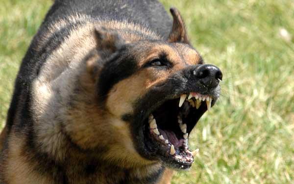 cane_aggressivo