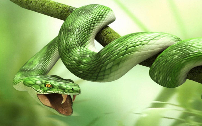 sognare-serpente