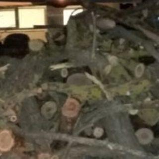 Roma, sorpresi a tagliare alberi secolari nella riserva naturale del Laurentino: arrestati 3 rom
