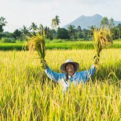 La storia del contadino che cambierà il tuo modo di vedere la vita