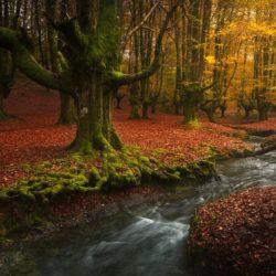 Le 16 foreste più belle e magiche del mondo.