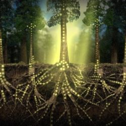 Un ecologista sostiene che gli alberi parlino tra loro in una lingua che possiamo imparare.